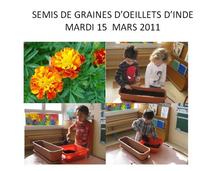 ma classe maternelle 2010 2011 12 semis de fleurs groupe jaune. Black Bedroom Furniture Sets. Home Design Ideas